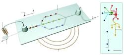 Magnetic Resonance and Microfluidics